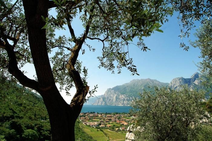 enogastronomia-italia-knowing_carlo-attivati